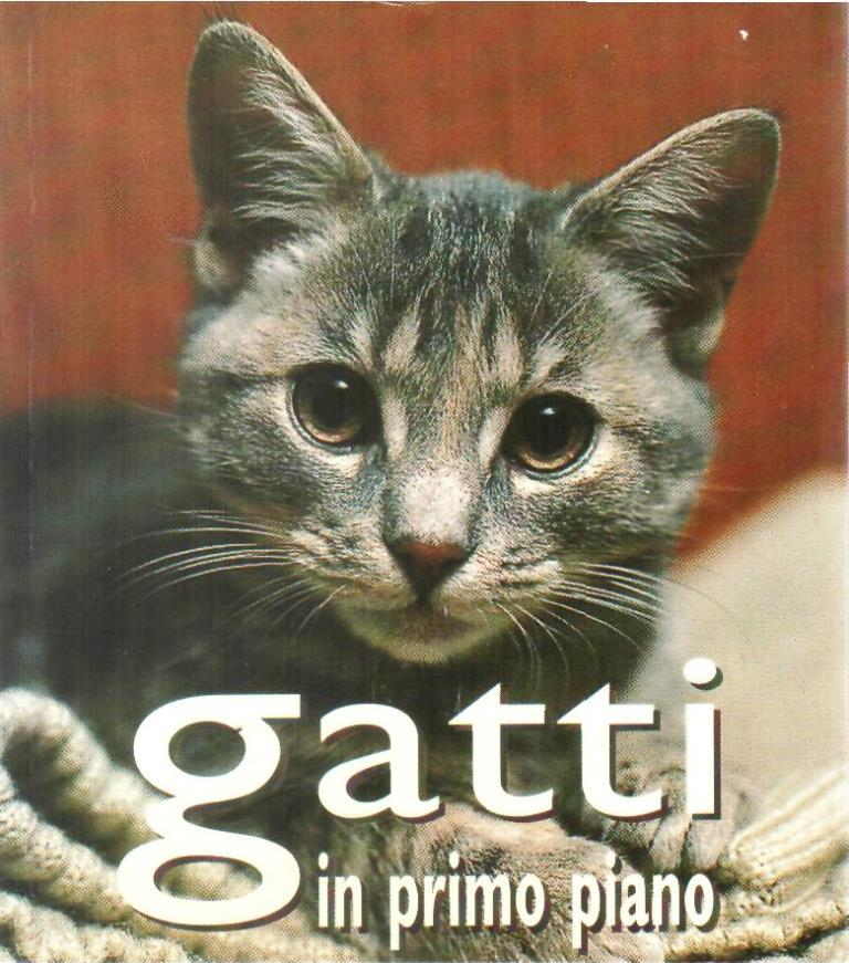 Gatti in primo piano